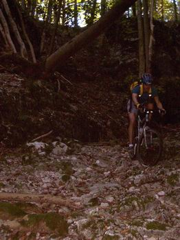 Felsstufen würzen diesen namenlosen Downhill.