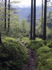 Des Downhills zweiter Teil. Weiter unten wird